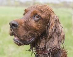 cork-taint-wet-dog crop