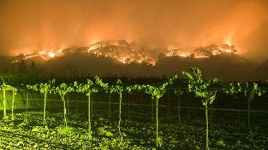 fires-vineyards