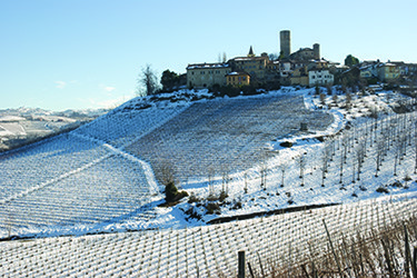 Barbaresco-winter