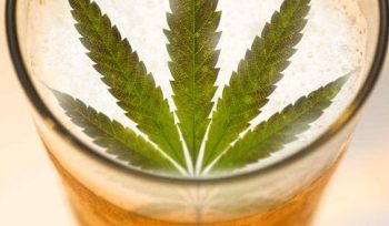cannabis-beer-pot